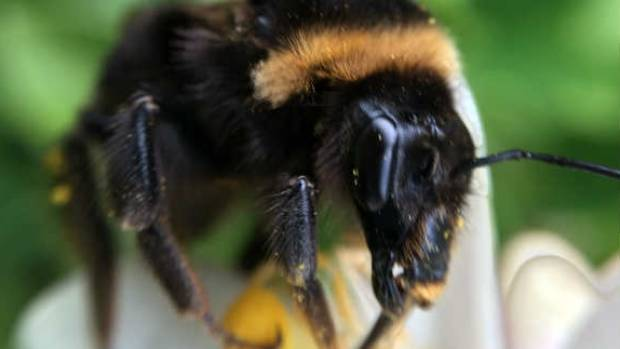Create a permanent home for queen bees this spring.