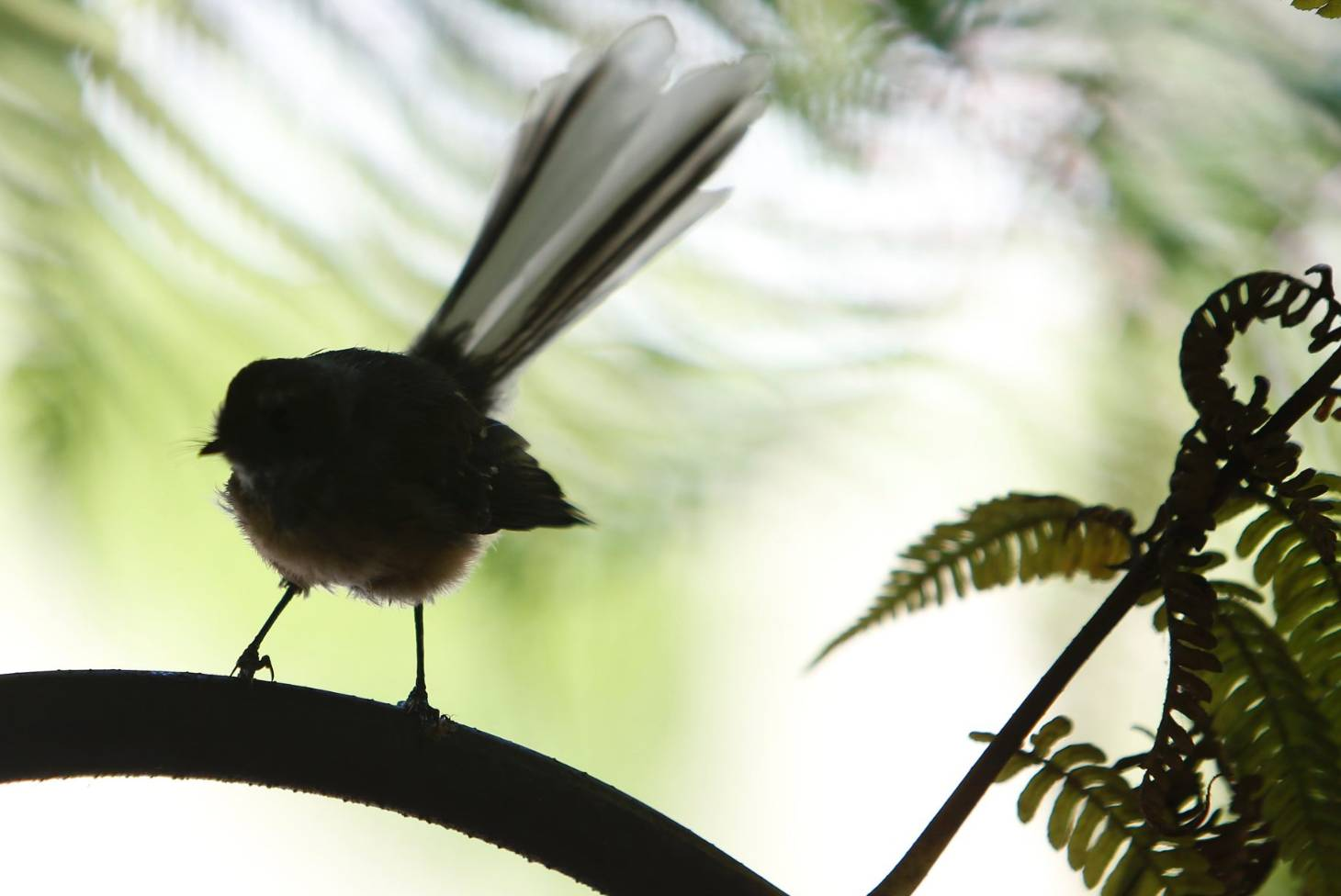 Ten things you never knew about New Zealand's birds | Stuff co nz