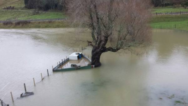 """""""Had to save our pet pig he was swimming."""" Mauriceville, Masterton."""