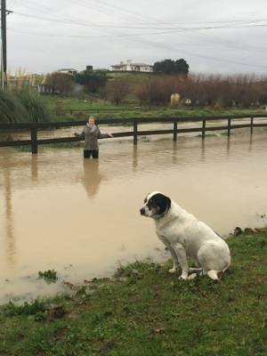 Te Horo resident Anna Dent stands in the flooded Mangaone stream that nearly flooded her property on Saturday.