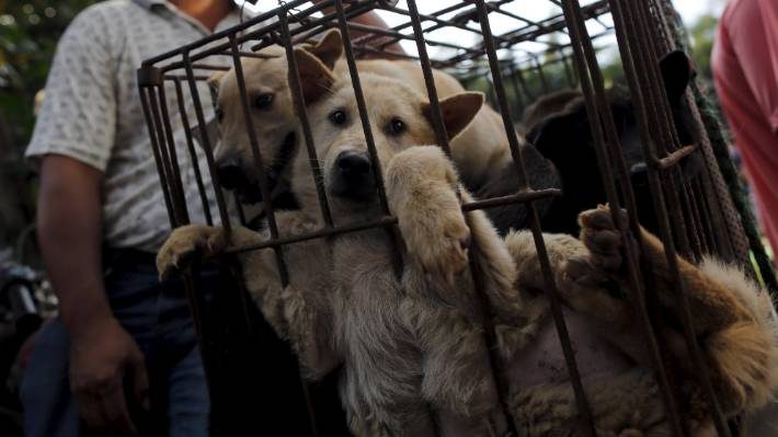 Thousands of cats and dogs killed at festival in China | Stuff co nz