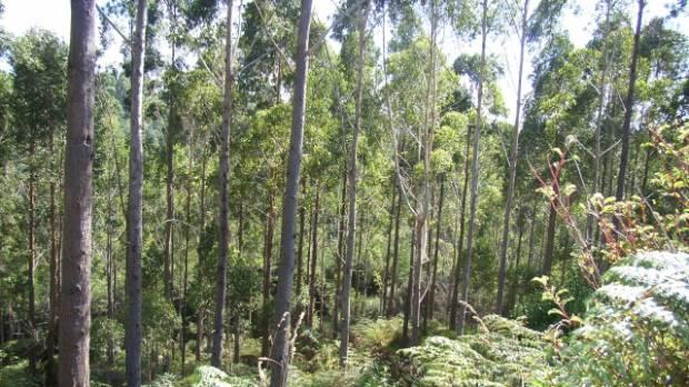 10 gum trees that also make good firewood for Garden design under gum trees