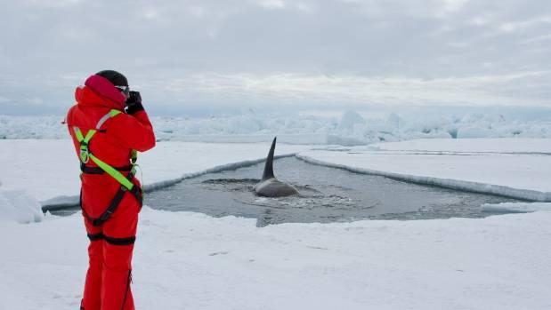 Killer whales swim nearly 5000km from antarctica to nz University of regina swimming pool