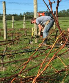 Greg Stokes and workmates at Murdoch James Estate in Martinborough need one day to rip out  2100 vines. They were ...