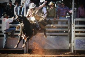 A bull rider hangs on at the Mount Isa Rodeo in the Queensland Outback.