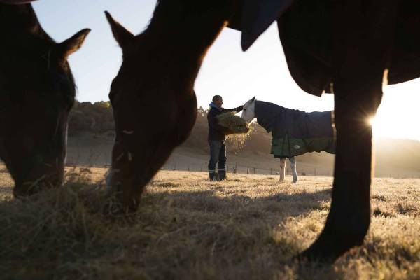 One of the reasons using horses works so well in the leadership courses is that leadership is about following through, ...