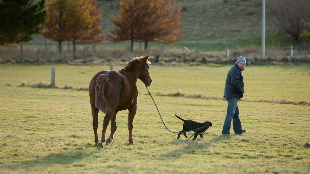 Bobby the puppy gives Andrew a hand to lead his horse, Rock.