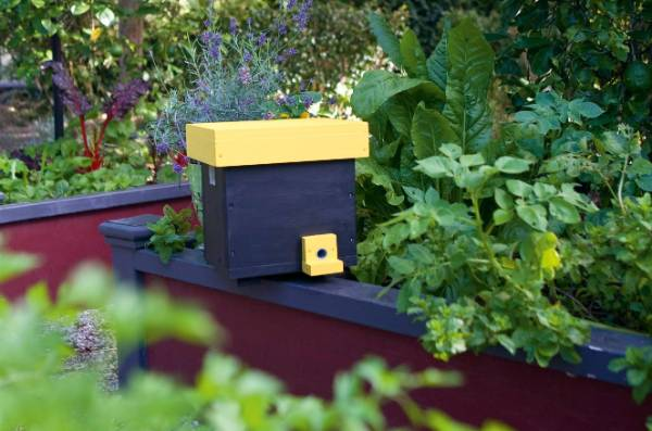 Build a home for nesting bees this spring.