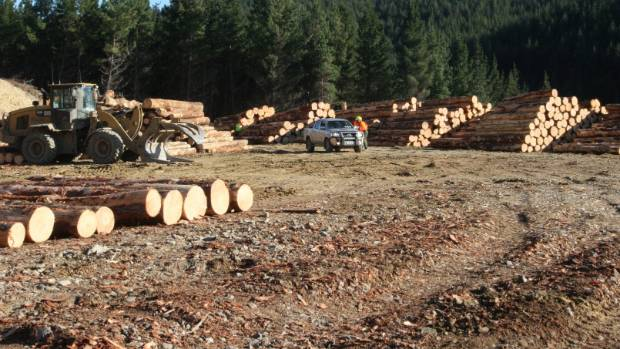 A Nelson forestry skid site has been targeted by thieves for the fourth time in less than a year, sparking a police ...