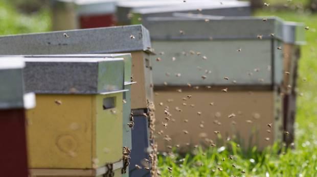 Bees swarm around hives.
