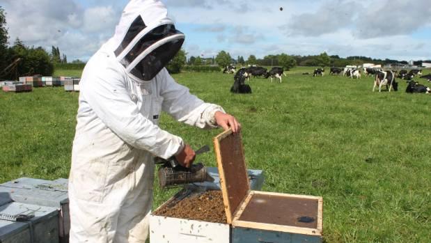 A beekeeper tends a hive.