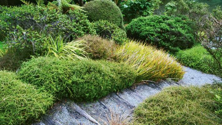 The best native ground covers for Kiwi gardens | Stuff.co.nz