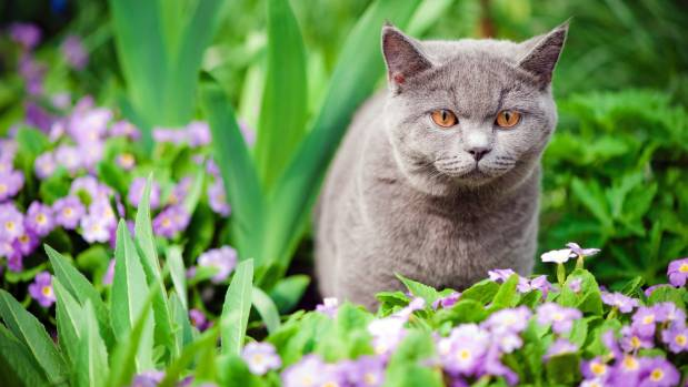 They May Look Cute, But Cats Can Get Up To Mischief In Your Garden.