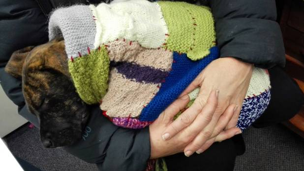 A new programme at Rolleston Prison has inmates knitting blankets for abandoned animals.