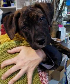The blankets have been useful at the Canterbury SPCA this winter, which is seeing a high number of dogs and puppies.