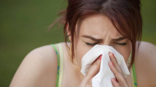 The beginning of spring means hay fever season for 1.2 million New Zealanders.