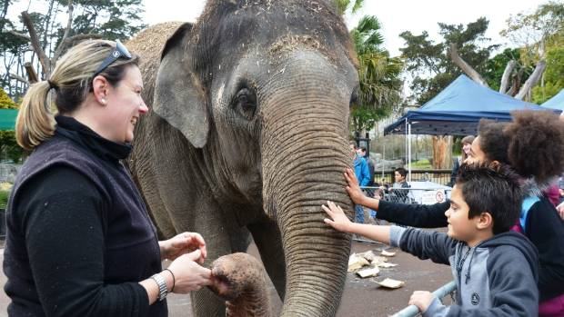 Another elephant, Anjalee, arrived at Auckland Zoo in June.