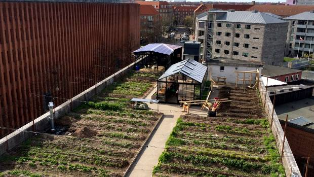 A rooftop garden in the central suburb of Osterbro (east bridge), Copenhagen, an example of a community-led project in ...
