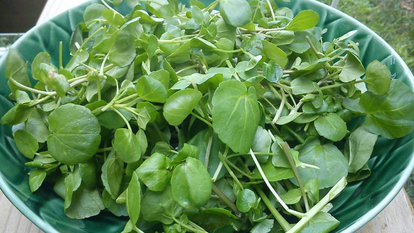 Lynda Hallinan How To Grow Watercress At Home Stuff Co Nz