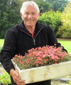 Bill Dijk with a tray of Oxalis massoniana, a bulb native to South Africa