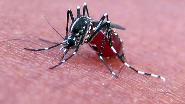 Mosquito Feeding Microsofts Project Premonition Is Using The Insect To Predict Spread Of Diseases