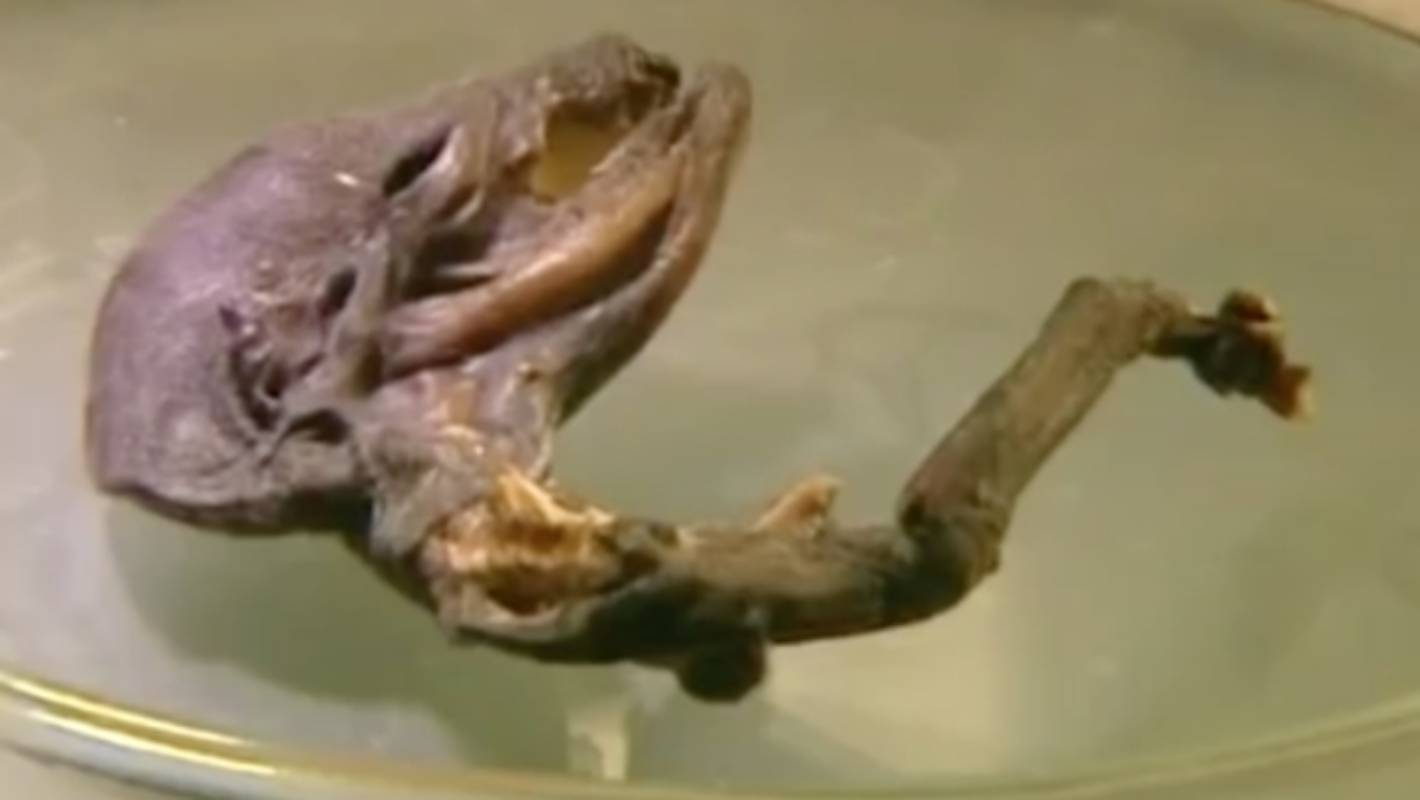 alien female corpse discovered in sibera - HD 1420×800