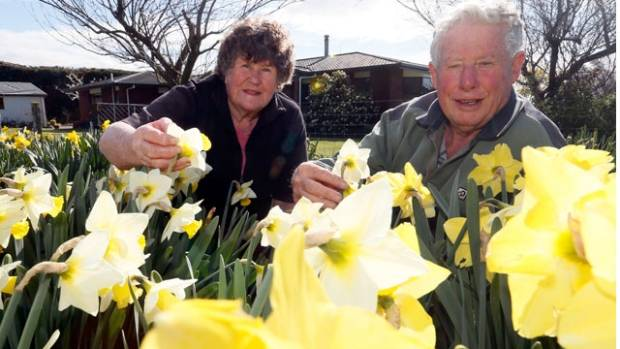 Marie Hunter and John Hunter with daffodils growing at their Hope property. John Hunter showed his first daffodil at a ...