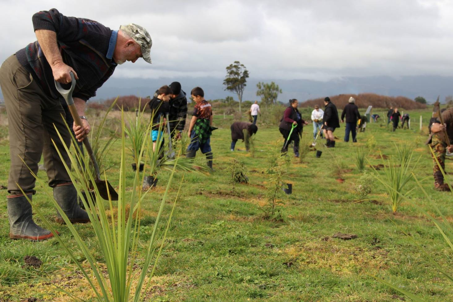 Environmental restoration of Lake Horowhenua nears next phase ...
