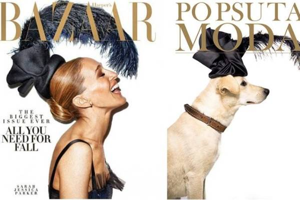 This dog apparently doesn't suffer fools as gladly as SJP.