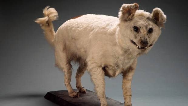 Breeds Of Dogs In New Zealand