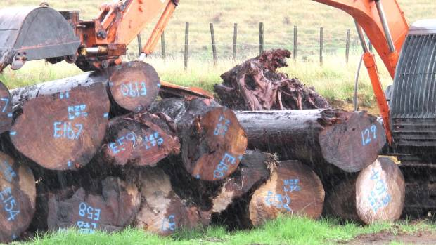 Stacked swamp kauri logs on a Northland property. (File photo)