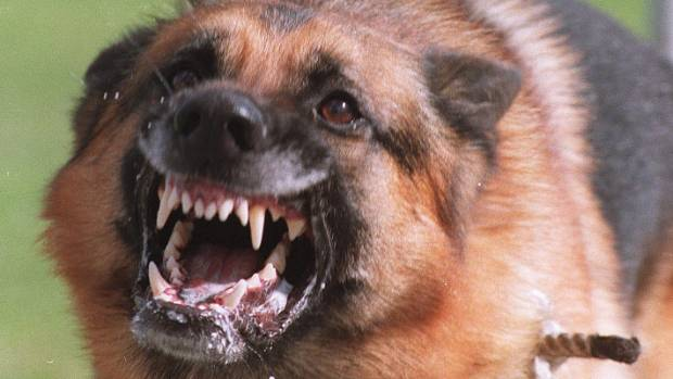 """Christchurch Hospital is treating someone for a dog attack """"almost every day""""."""