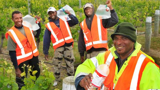 A labour survey will help the Marlborough wine industry determine how many workers, including RSE workers, it will need ...