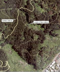 The location of the two falcon attacks on Te Ahumairangi Hill.