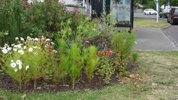Auckland berm garden protest growing for Grow landscapes christchurch