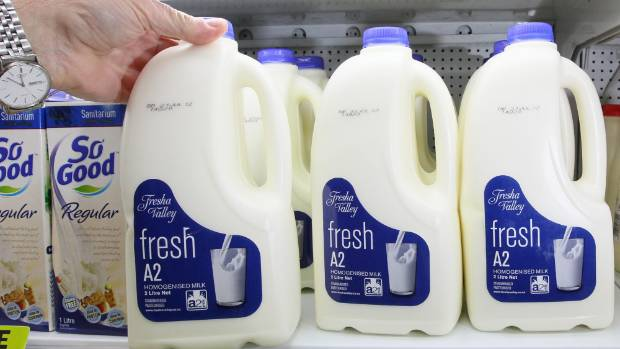 A2 milk comes from cows bred specifically without the A1 protein.