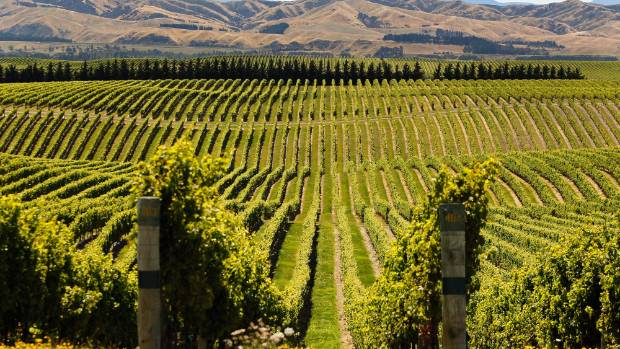 Because of the wine industry, Marlborough was the the fourth largest contributor to the horticulture and fruit-growing ...