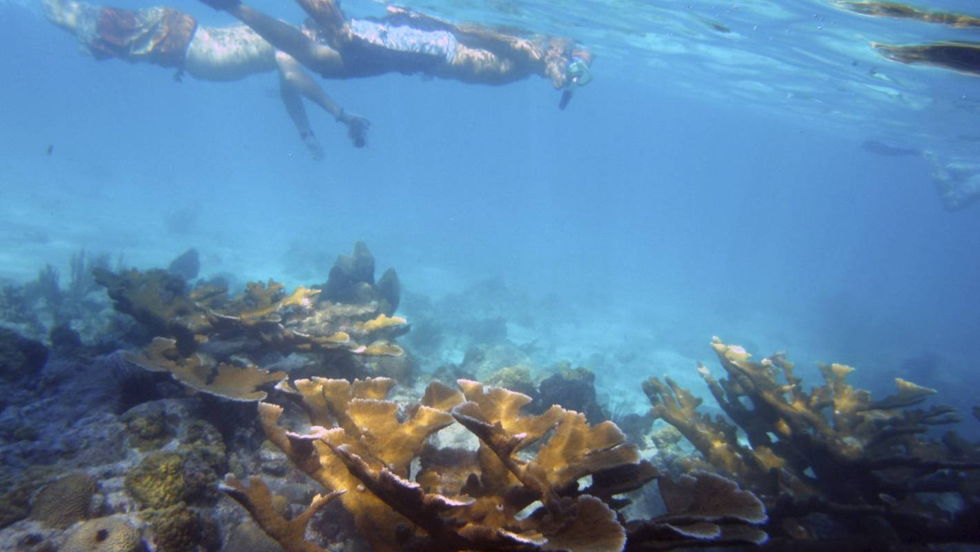 Study shows sunscreen is killing coral reefs in tourist areas