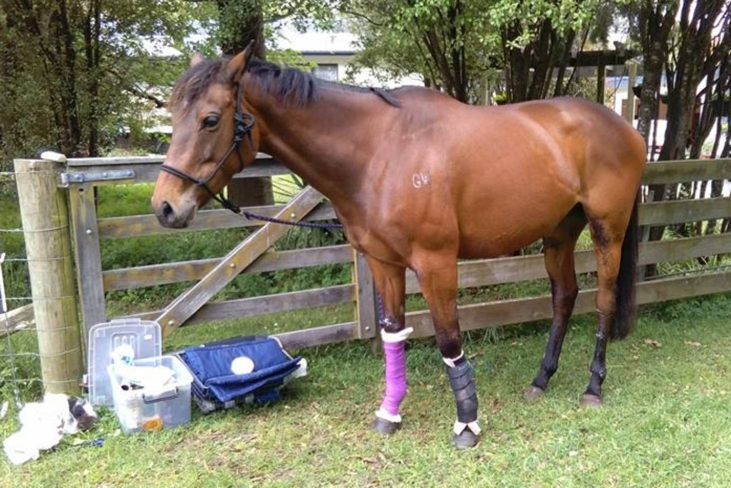 Horse injuries prompt renewed calls for firework bans