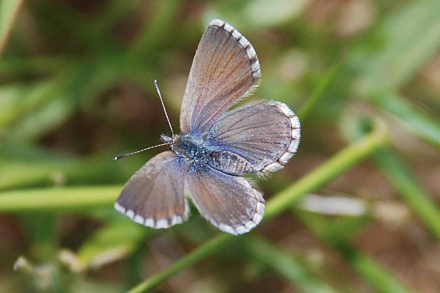 183177959 The prettiest pollinators: A guide to rare and common butterflies of New  Zealand | Stuff.co.nz