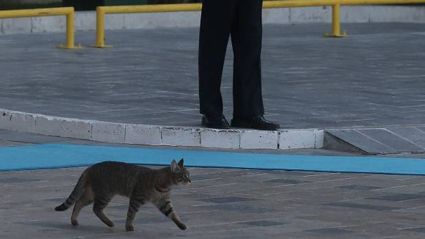 1f2ea457f5 A cat crosses the carpet during the official welcome ceremony on day one of  the G20
