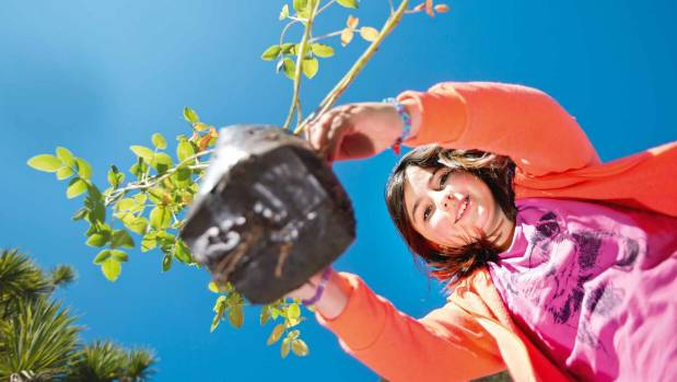 Research indicated children who participated in gardening improved academically.