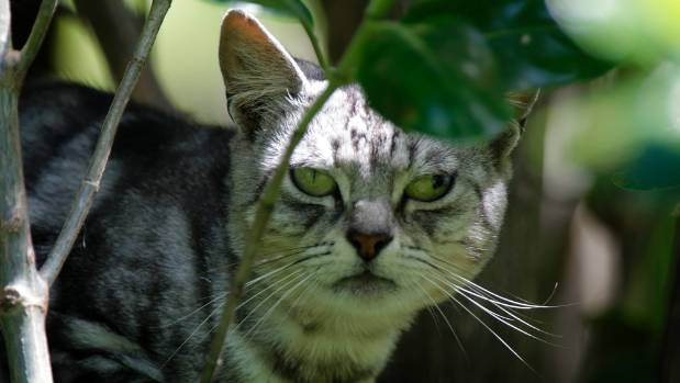 Wellington is keen to get tougher on cats that are killing the city's native wildlife.