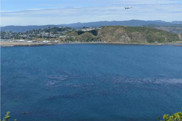 The existing view from Te Raekaihau Point.