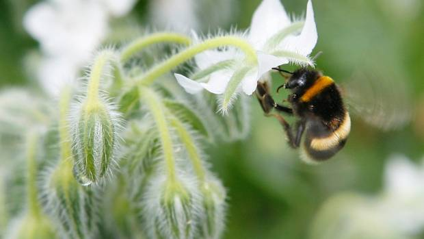 Bumble bees are humans' friends.