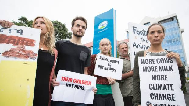 Members of animals advocacy group Safe staged a protest outside Fonterra's central Hamilton office on Tuesday. From ...