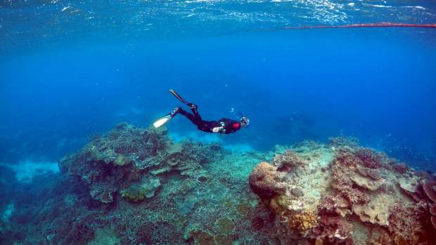 Tthe 'Coral Gardens' located at Lady Elliot Island,