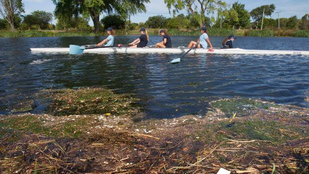 A girls rowing team practises on the Avon River at Kerrs Reach, with debris floating near the river bank. The Avon ...
