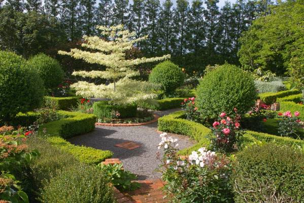 wedding cake tree nz garden of the week a sprawling new plymouth garden 26706