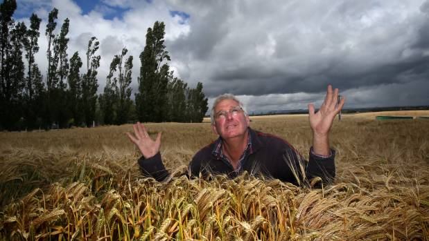 This week's heavy rain was welcome news for Timaru farmer Warren Darling.